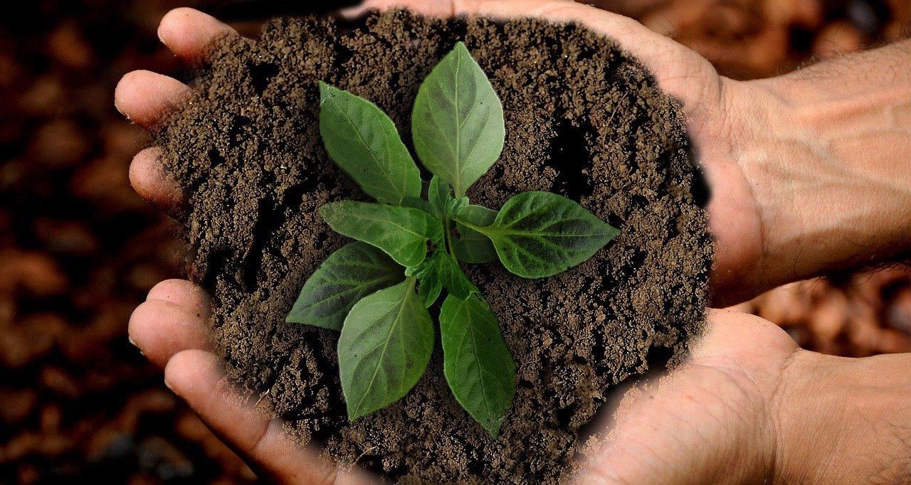 México fortalece sistema sustentable en sectores productivos