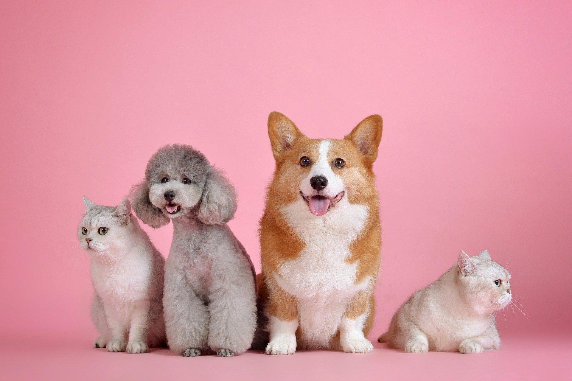 BBVA anunció el lanzamiento de un seguro para mascotas