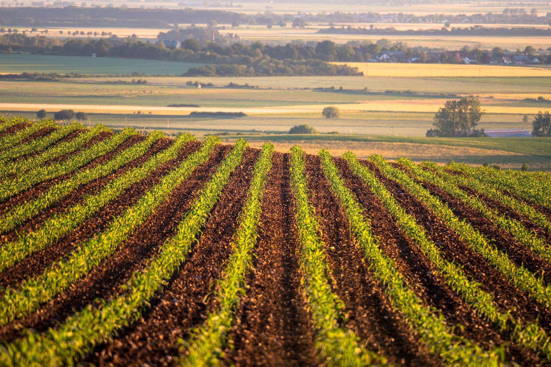 Firman convenio para garantizar la inocuidad agroalimentaria