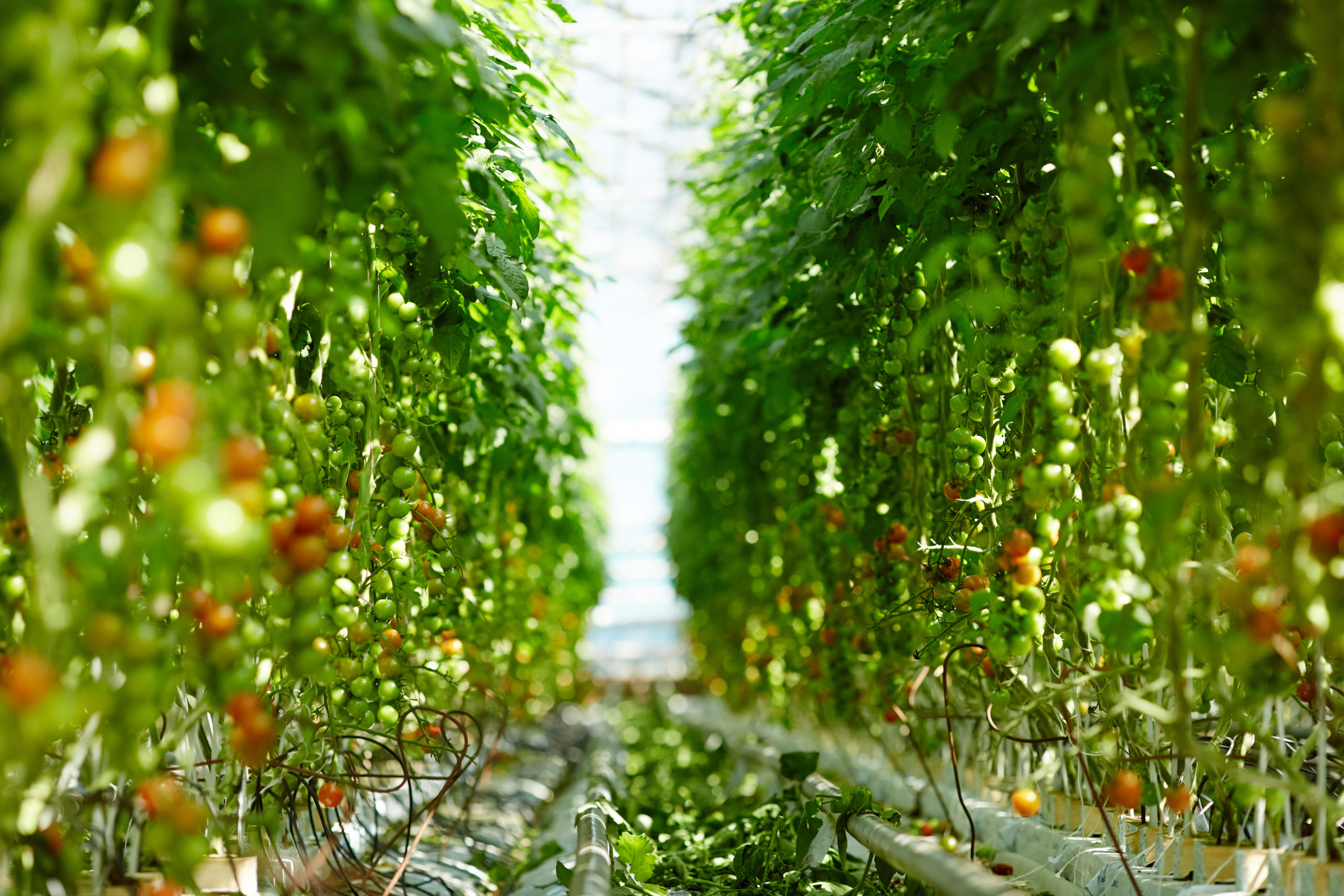 Balanza agroalimentaria registra superávit