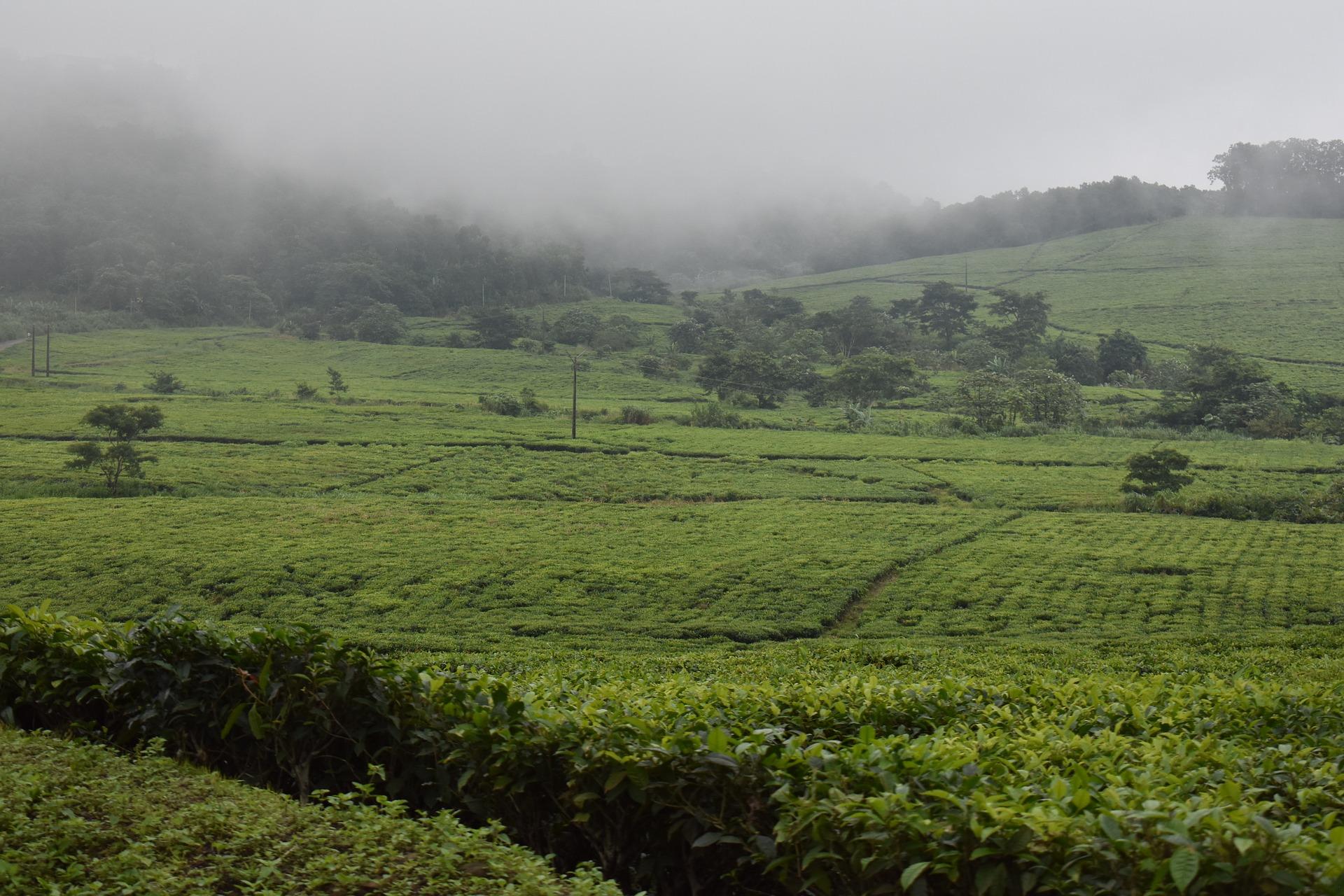 Analizan impacto de COVID-19 en sector agropecuario