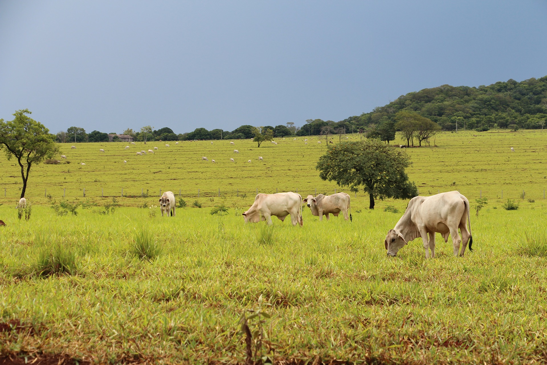 México y Argentina trabajarán por seguridad agroalimentaria