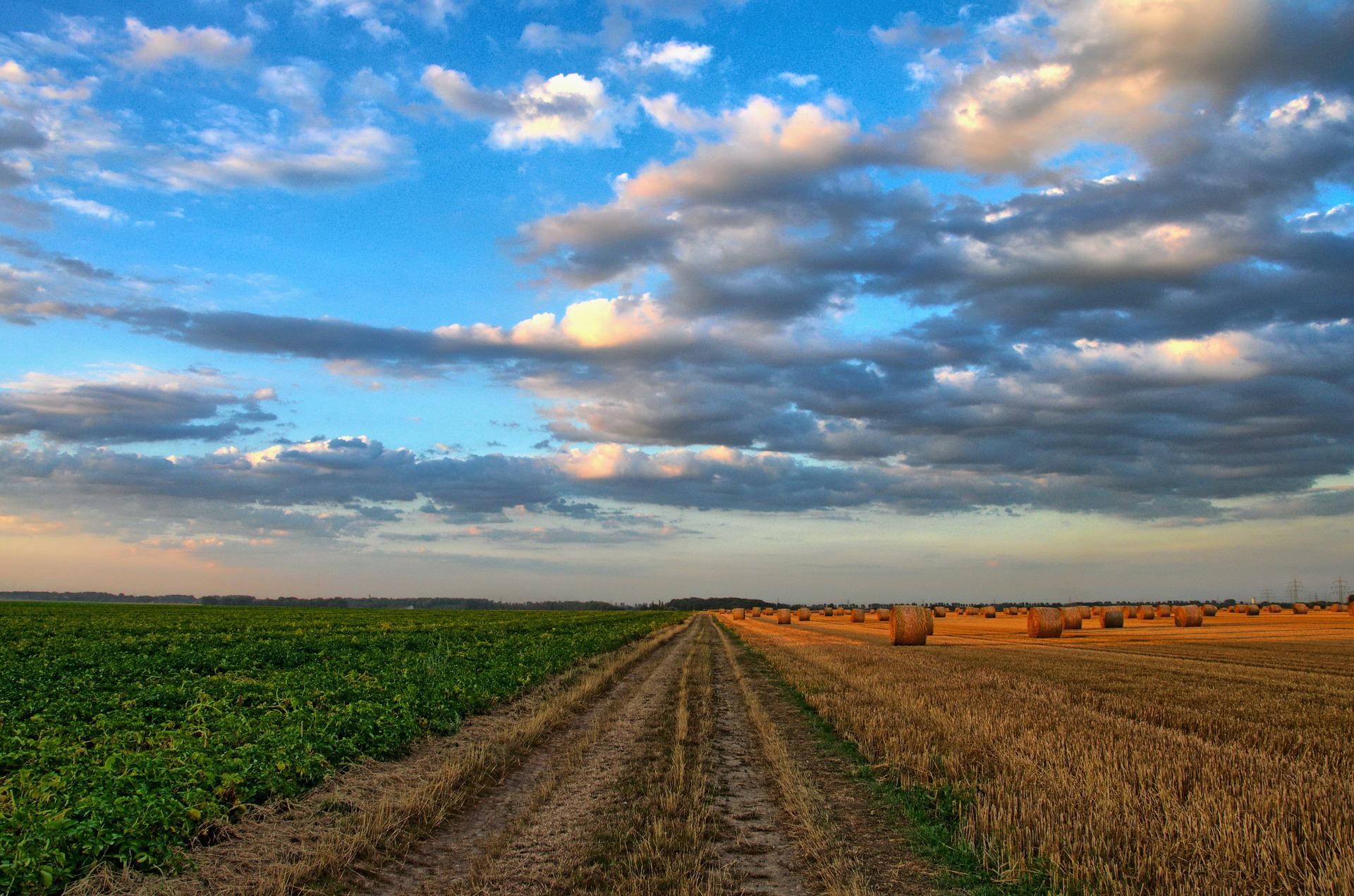 PepsiCo apuesta por prácticas agrícolas regenerativas