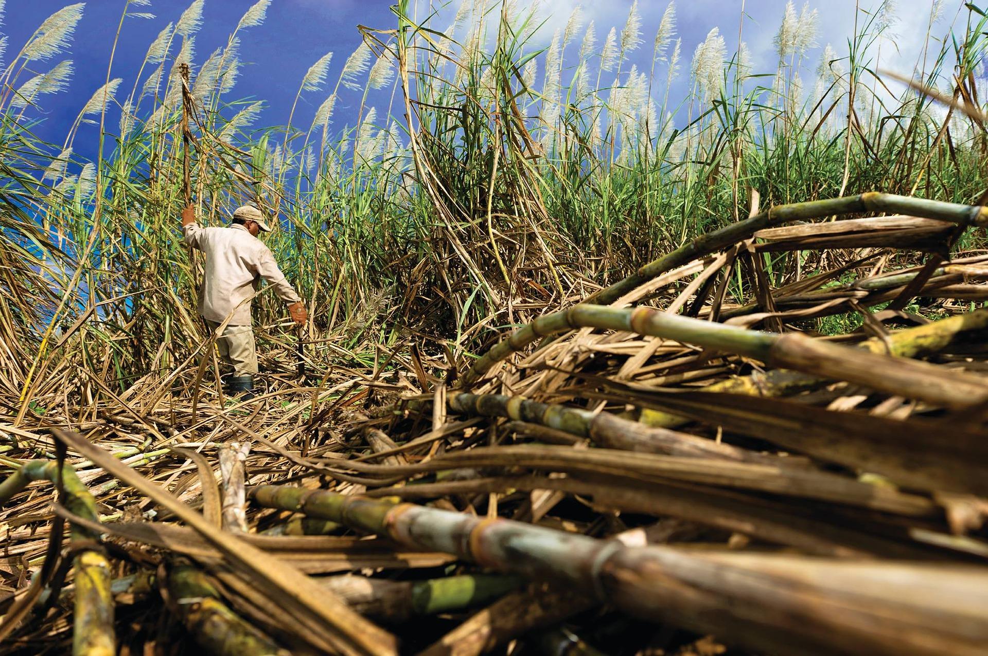 Producción azucarera registra descenso