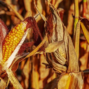 Erradican plagas con tecnología agroecológica