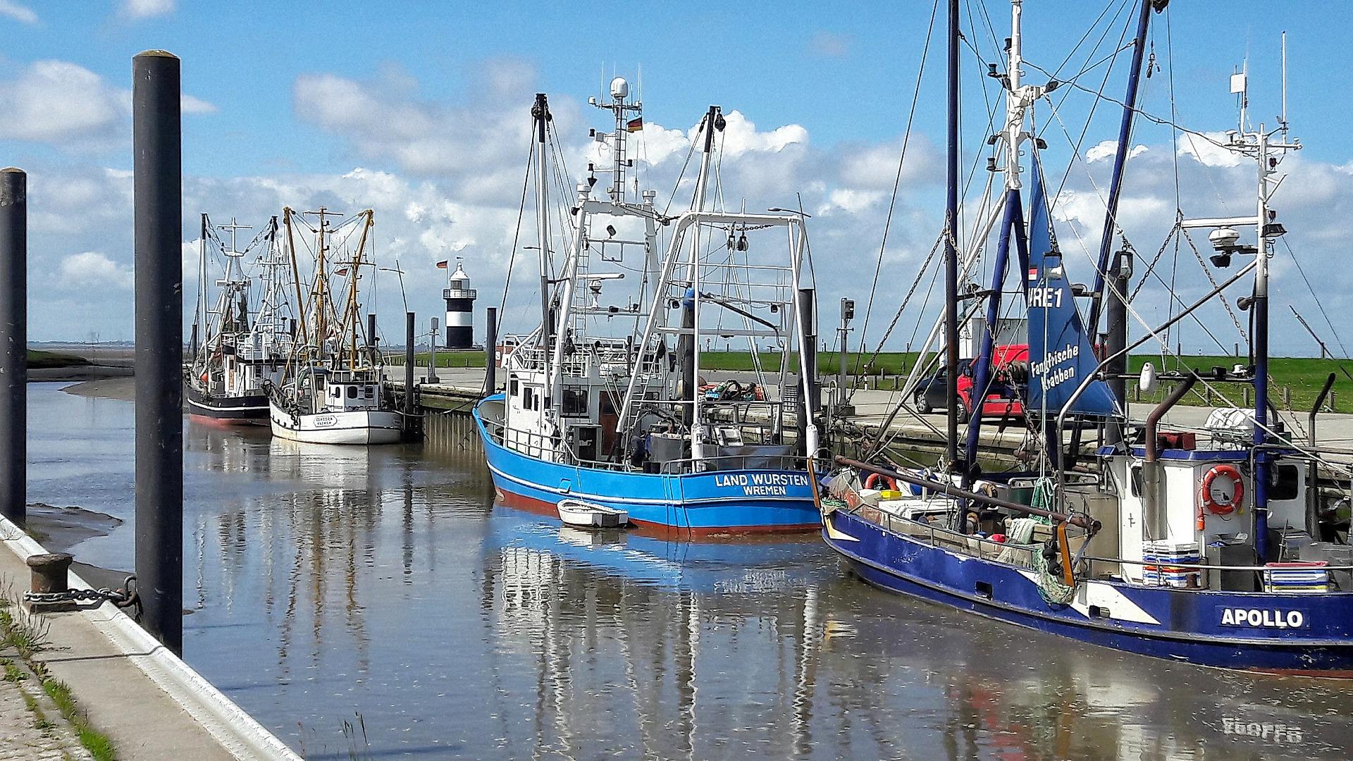 Sader estima crecimiento del 5.3% en producción pesquera