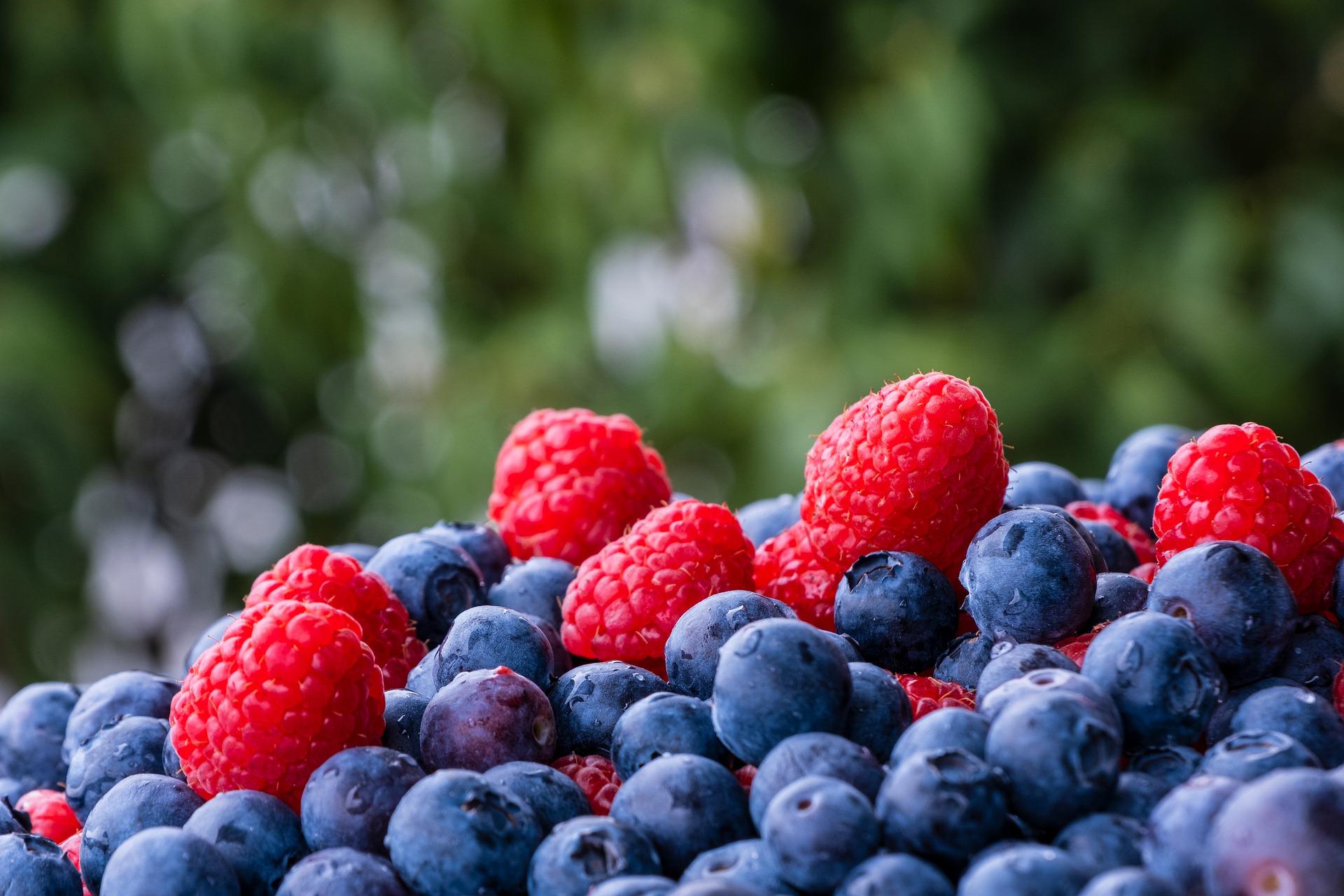 Derrama económica por venta de frutos rojos es de más de 9 mmdp