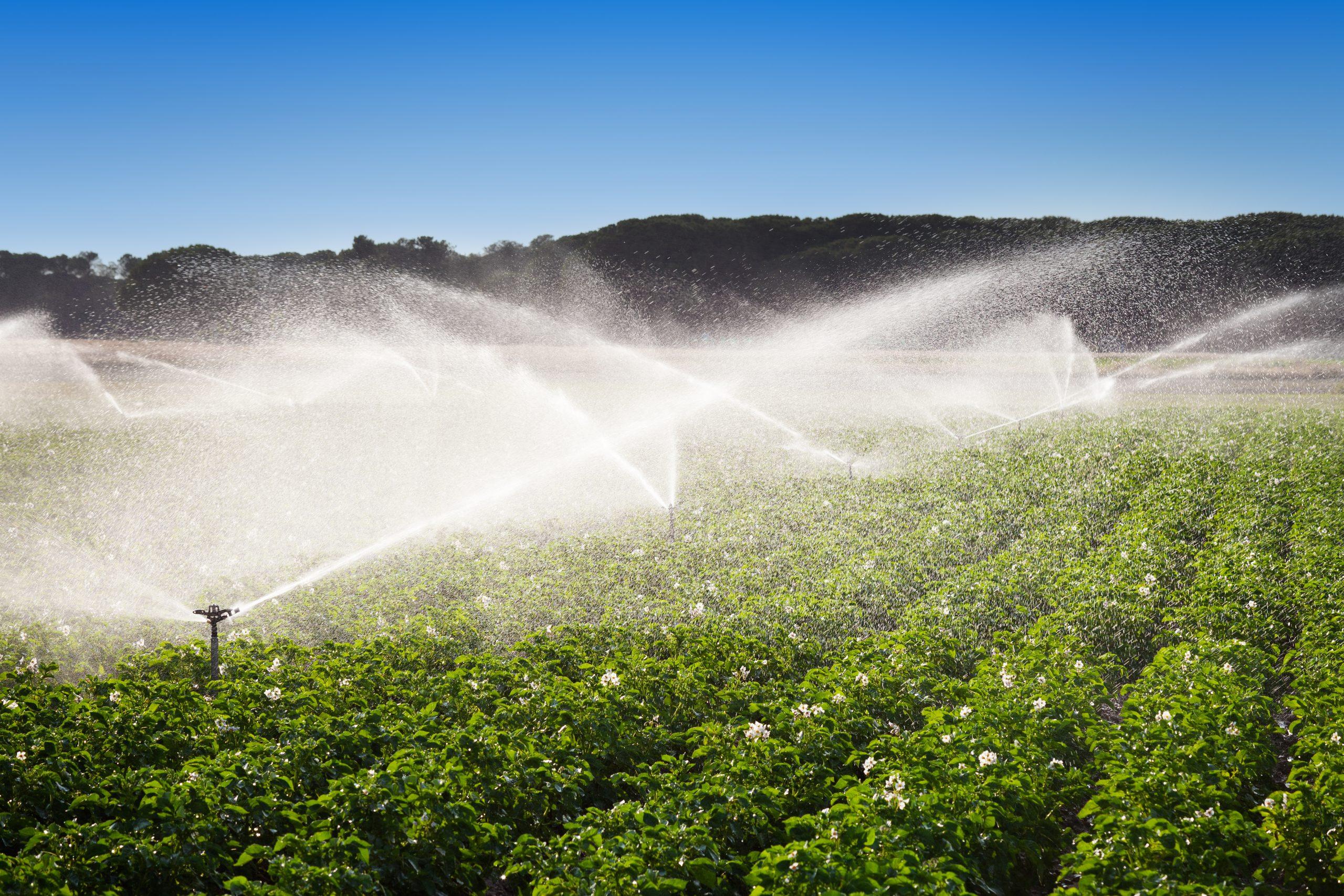Guanajuato y Grupo Modelo combatirán la escasez de agua