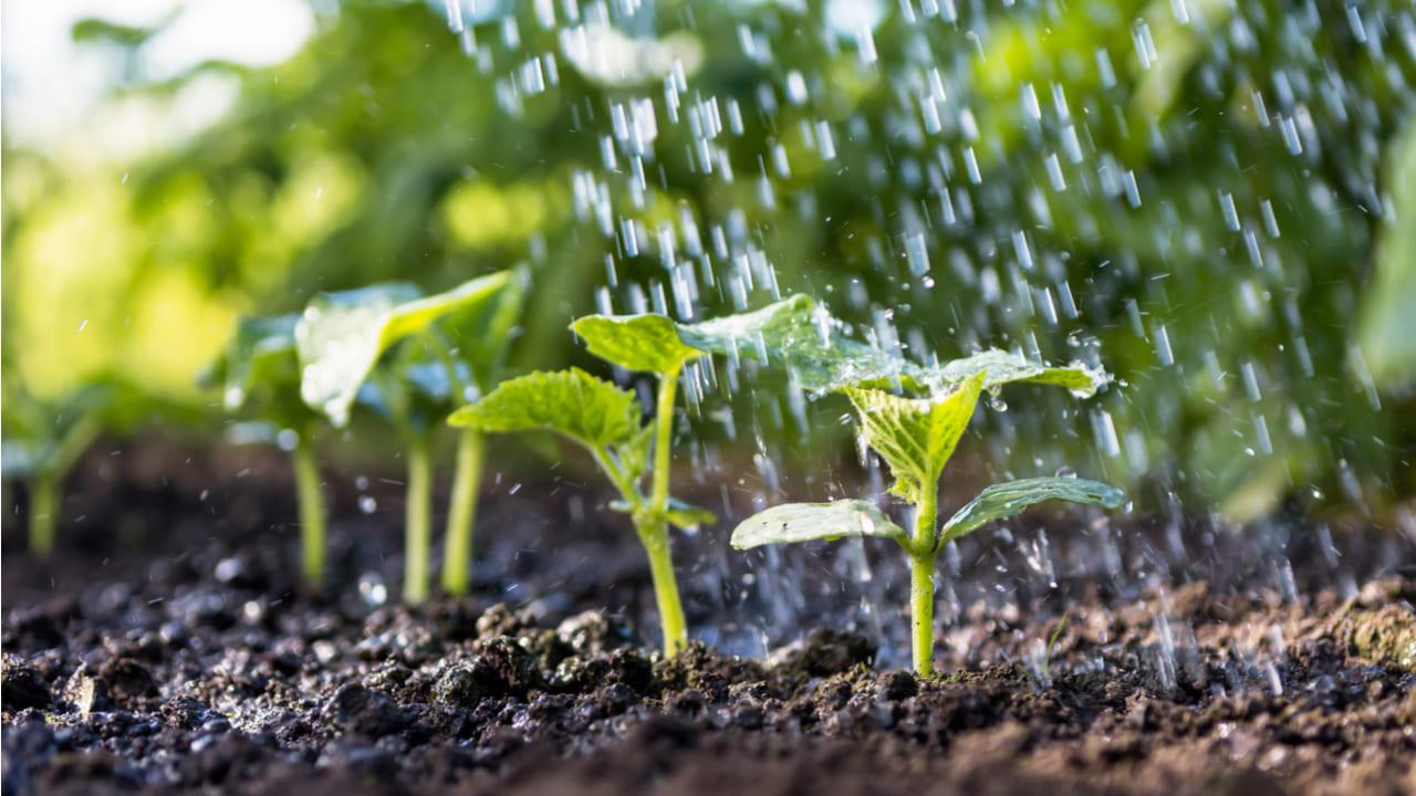 El agua se transforma en alimentos