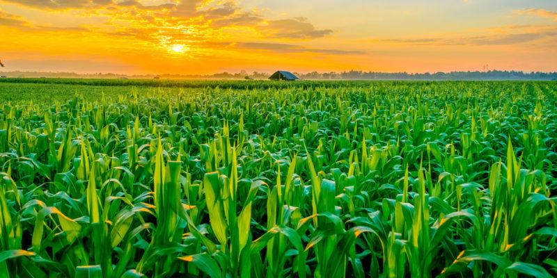 Transformación de los sistemas alimentarios