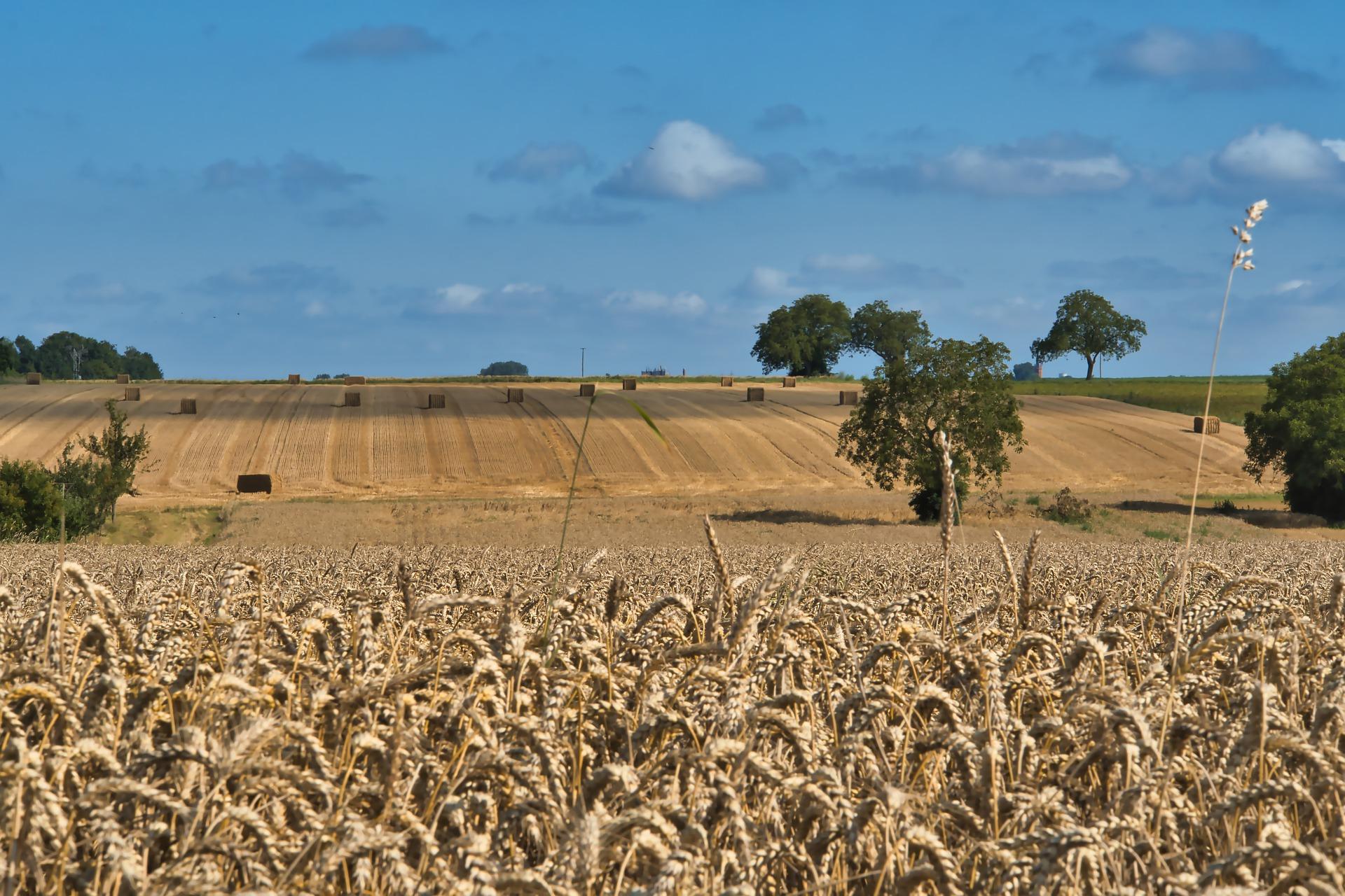 Balanza agroalimentaria creció en 1S