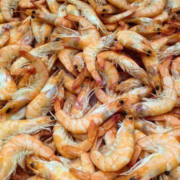 México recupera certificación de camarón